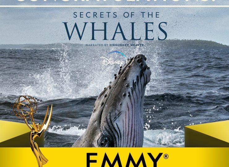 Secret Whales Winner 1x1 Generic