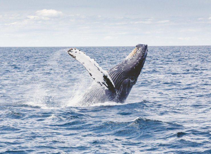 Humpback whale 1209297 1920