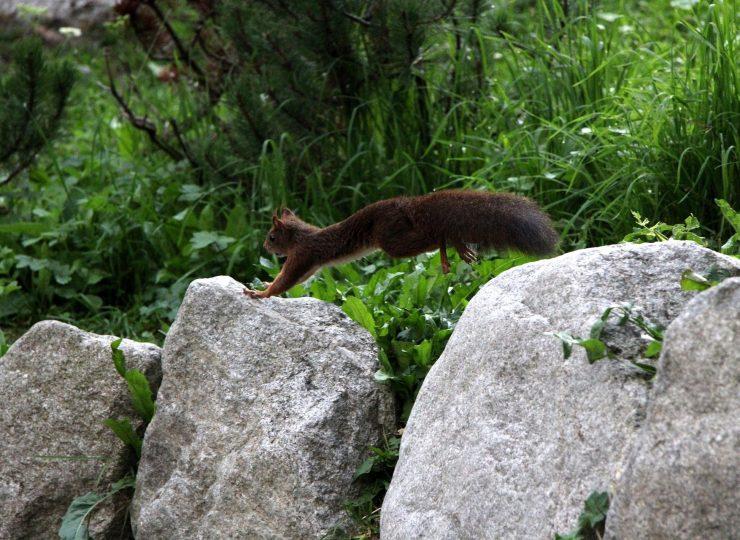 Squirrel 5256287 1920